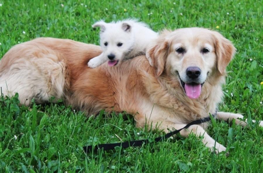 Exotische Hundenamen