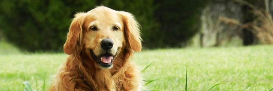 Hundenamen Hündinnen