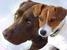 Hundenamen nach Geschlecht - immer eine gute Wahl