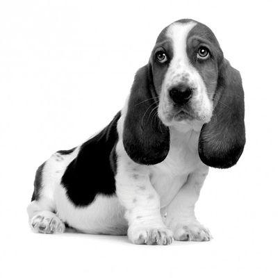 Männliche Hundenamen Top 10