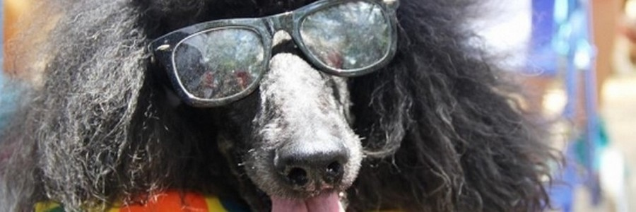Originelle Hundenamen
