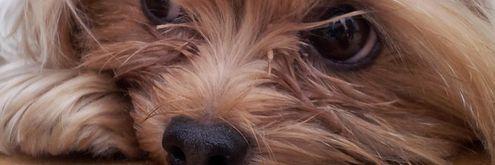süße Hundenamen